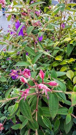 Little River, Καλιφόρνια: Inn Flowers