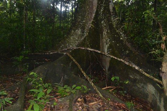 Barrio Florido, Peru: Massive Amazonian three