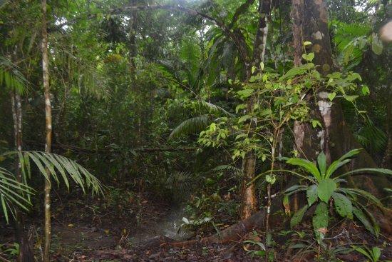 Barrio Florido, Peru: The jungle