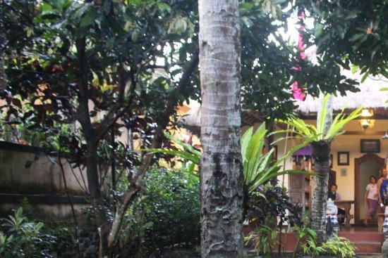 Villa Awang Awang: Reception