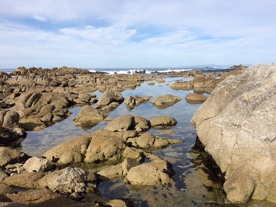 Asilomar State Beach: Rocky and beautiful beaches