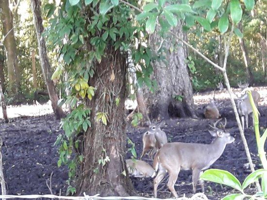 Villa Maya : Cervos nas proximidades