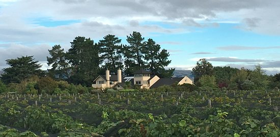 Masterton, Neuseeland: Over the vines