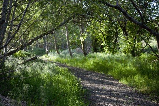 ลิงคอล์นซิตี, ออริกอน: Alder Island Nature Trail