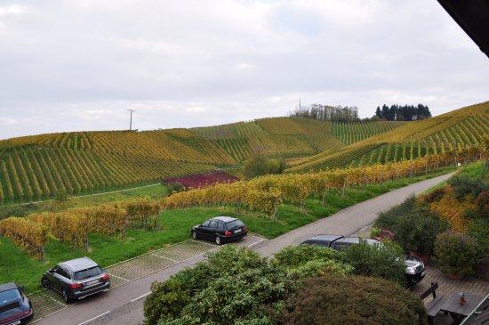 Sasbachwalden, Γερμανία: Vineyards view from the upper room