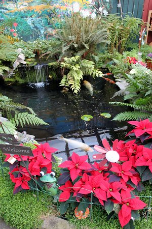 Mossyrock, วอชิงตัน: Koi Pond decorated for the holidays.