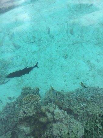 Мури, Острова Кука: photo2.jpg