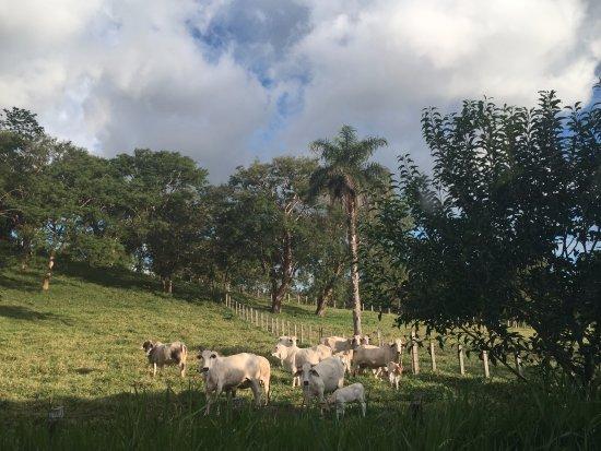 Playa Hermosa, Costa Rica: The beautiful countryside
