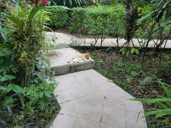 DoceLunas Hotel, Restaurant & Spa: always a cat hanging around