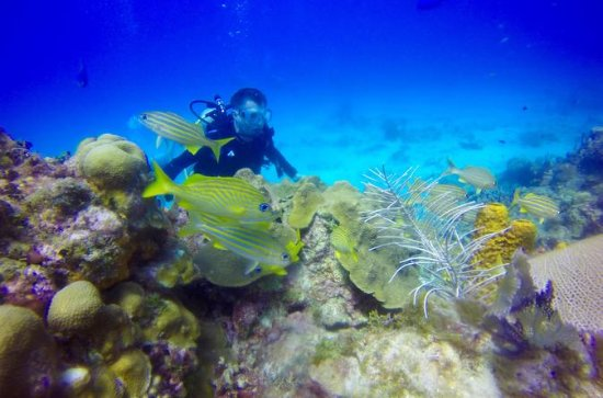 Discover Scuba Diving & Snorkeling...