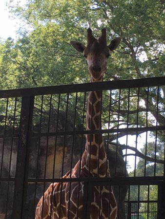 The Jackson Zoo: Baby Giraffe that Christina called over so we could see him close up.