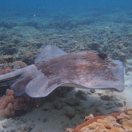 Νησί Lady Elliot, Αυστραλία: My son took these photos during our stay .... awesome place