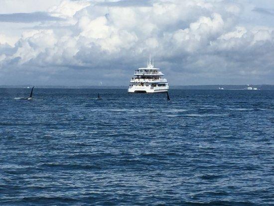Friday Harbor, WA: Large Pod