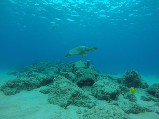 Hauula, Hawaje: received_10213667718540183_large.jpg