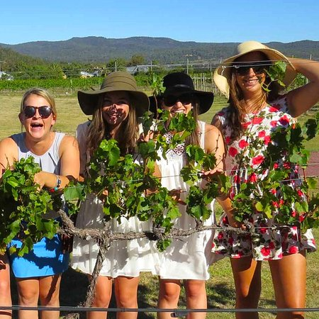 Lovely ladies enjoying a day out at our Stanthorpe Wineries