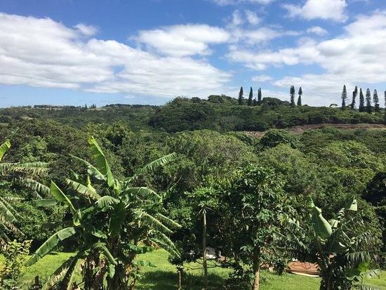 Umzumbe, Sudáfrica: IMG-20171128-WA0000_large.jpg