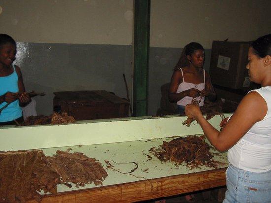 Tabacalera de Garcia Factory Tour: Haciendo puros, paso 1