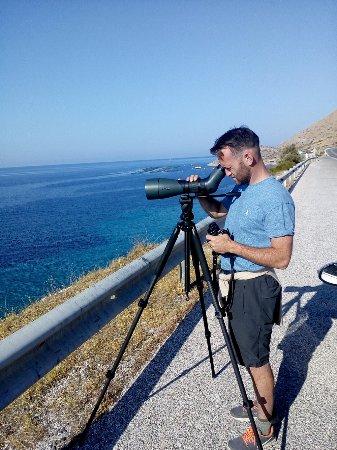 Marathon, Grécia: Sea birding is always rewarding