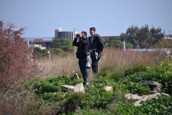 Marathon, Grécia: birding tour around Athens