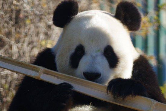 Dalian Forest Zoo : 大連森林動物園 飛雲ちゃん
