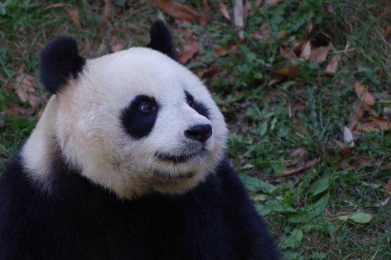 Dalian Forest Zoo : 大連森林動物園 彩珍ちゃん