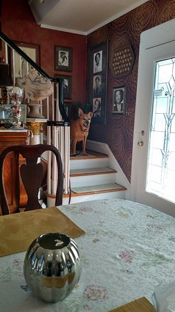 Bewitched & BEDazzled Bed & Breakfast: Roxie felt very comfortable here. :)