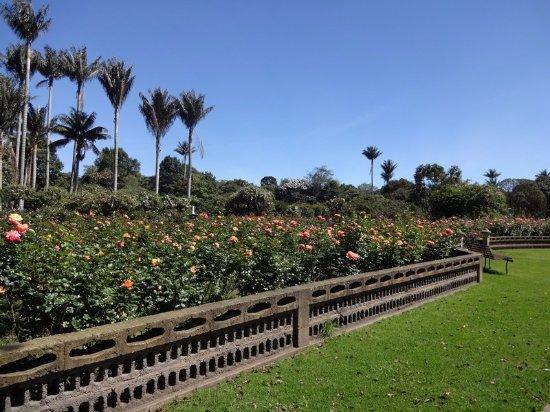 Jard n bot nico jos celestino mutis billede af jardin for Jardin botanico bogota