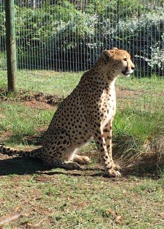 Tenikwa Wildlife Awareness Centre: photo1.jpg