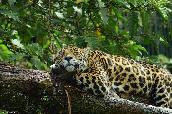 Parque Zoologico Guatika