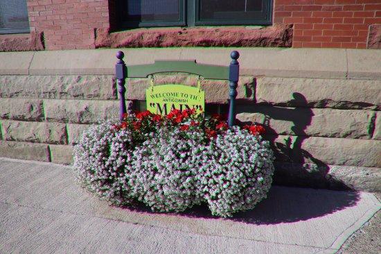 Town Hall: Nice flowers