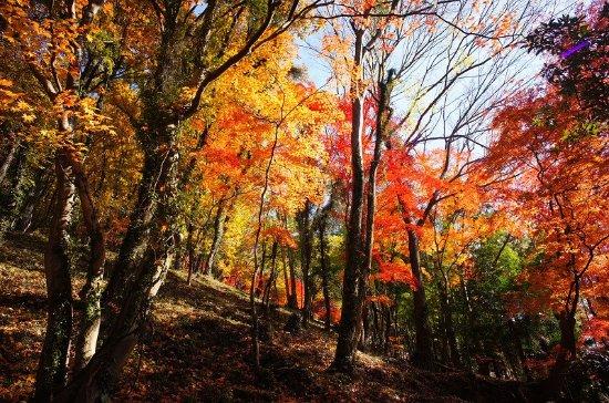 Midori, Japan: 紅葉です