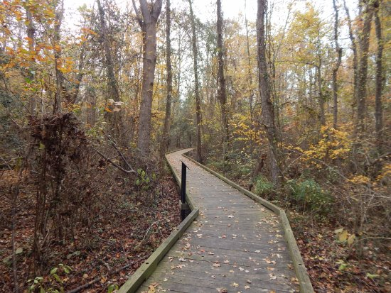 South Mills, Carolina del Norte: Dismal swamp TRACK trail boardwalk