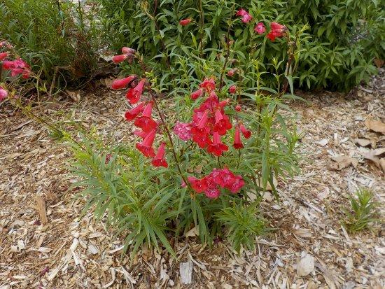Alphington, Australia: Garden bed
