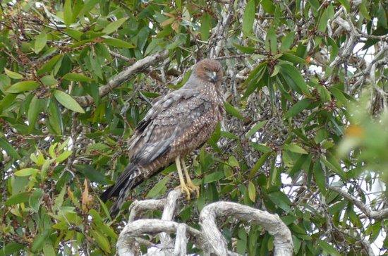 Birdwatching and Wildlife Noosa...