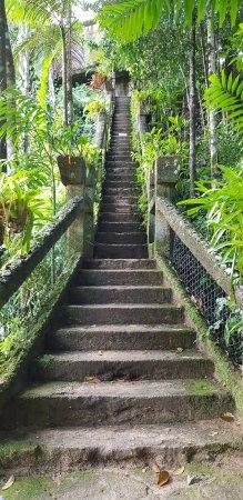 Mena Creek, ออสเตรเลีย: The staircase