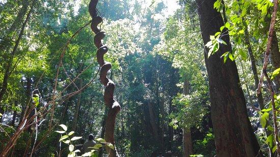 Hike to GuruluPotha Seetha Kotuwa