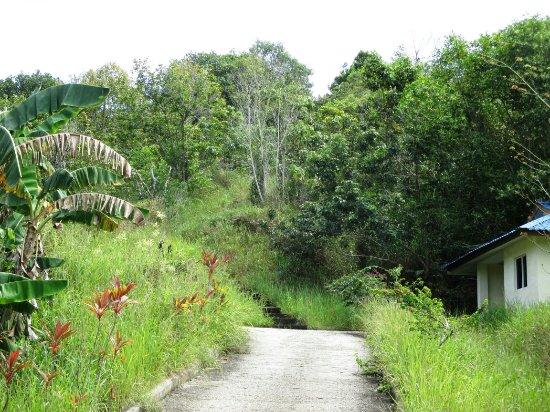 Bukit Tempayan Pisang