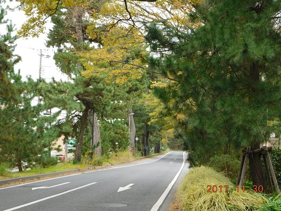 ‪Pine Tree-lined Former Tokai Road‬