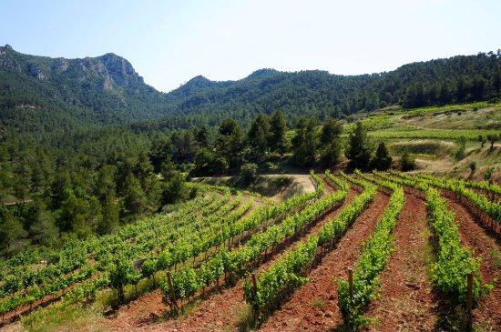 Capcanes, Espagne : Vinyes Doménech