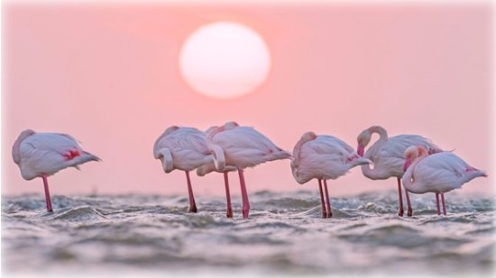 https://media-cdn.tripadvisor.com/media/photo-s/11/69/96/a1/greater-flamingos-in.jpg