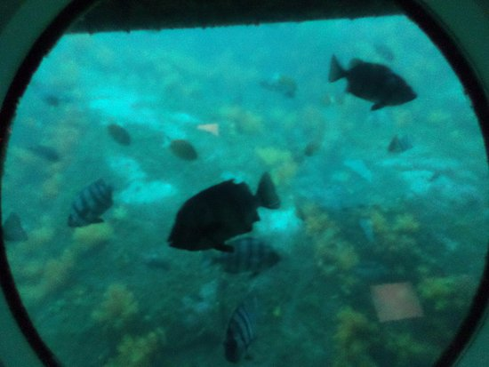 Seogwipo Submarine: What you can see while riding the submarine