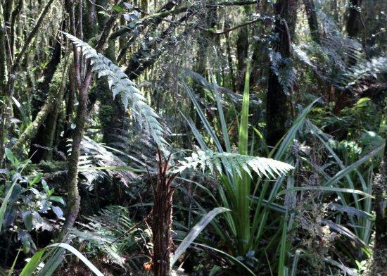 Fox Glacier, Nueva Zelanda: Stunning rain forest