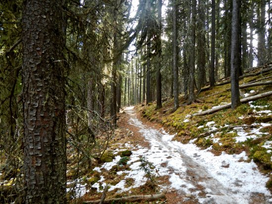 Bragg Creek, Canada: Some icy sections on trails
