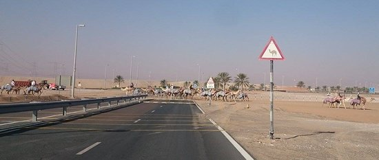 City Mall: bevare, camels on the road :)