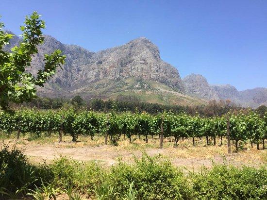 Tsiba Tsiba Wine Tours: Stunning setting for Oldenburg Vineyards, November 2017