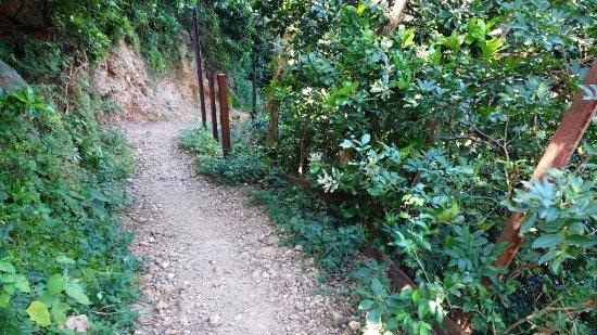 San Ramon, Nicaragua: goat path