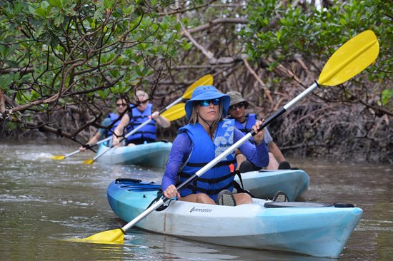 Up a Creek Kayak Tours : Great HD photos taken by our guides on our kayak tours.