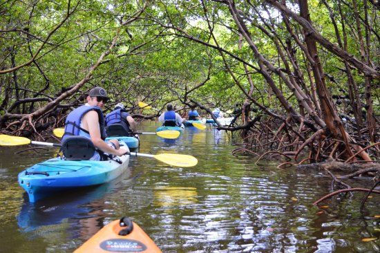 Up a Creek Kayak Tours : Floating through the beautiful mangrove tunnels on a kayak tour.