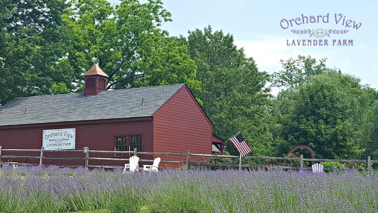 Port Murray, Νιού Τζέρσεϊ: Orchard View Lavender Farm