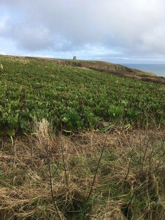 Ardmore, Ireland: coastal farms